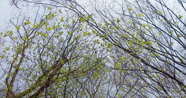 Blätter die wie Schmetterlinge emporsteigen