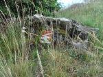 Traumpfade Markierung / Vulkanpfad