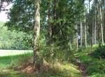 Trimbser Schweiz - Waldpfad