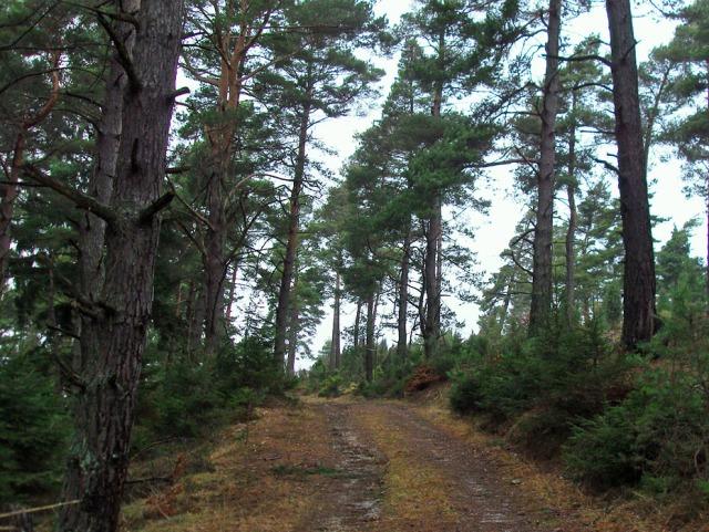 Waldwege wie ich sie mag