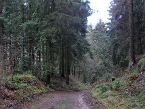 den Waldweg hinab