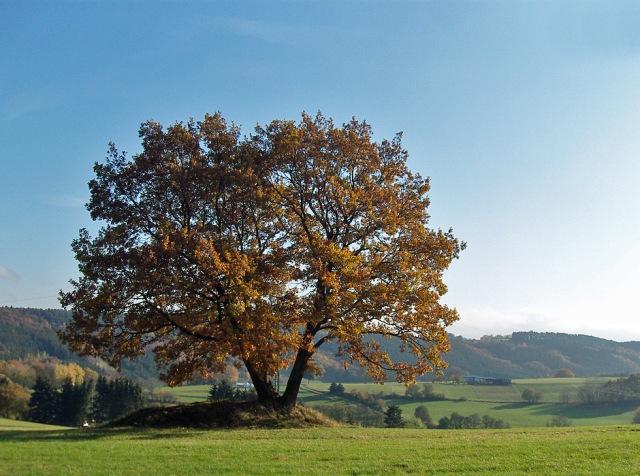 Eifelsteig zwischen Gemünd und Kloster Steinfeld