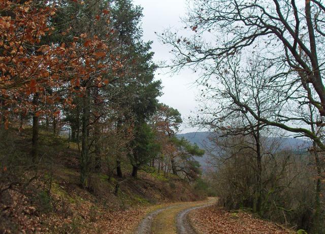 bunter Forstweg