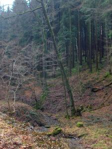 im Kaltbachtal