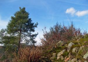 Felsen und blauer Frühlingshimmel