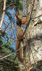 Aug-in-Aug mit dem Eichhörnchen