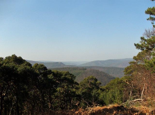 Der Blick in den Pfälzer Wald