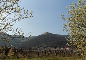 Blick vom Mandelpfad auf das Hambacher Schloss