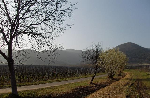 Blick vom Mandelpfad auf den Weinsteig