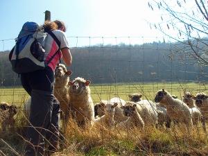 Karin umringt von Schafen