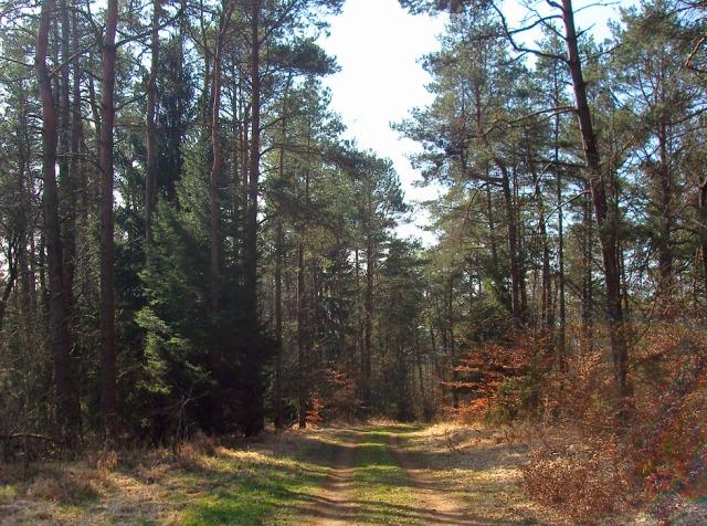 es geht in den Wald