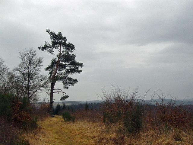 Landschaftsbild mit Lieblingskiefer