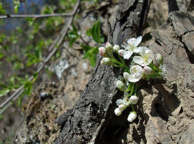Blüten am Fels
