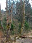 urige Bäume am Wegesrand