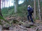 Eingetaucht in den Wald