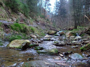 Wildbäche - hier der Ghasterbach