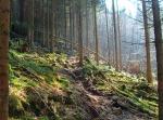 und wieder urige Pfade durch den Wald