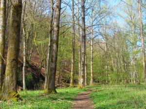 Stille im Auenwald