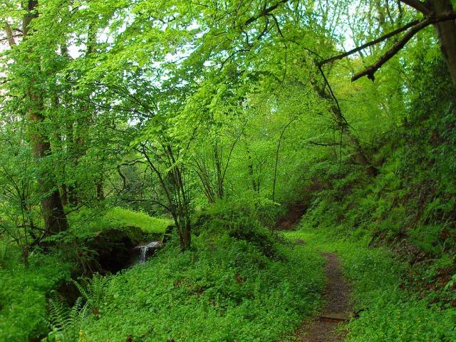 Wie im Urwald - Der Zuweg vom Bahnhof Merten zum Natursteig