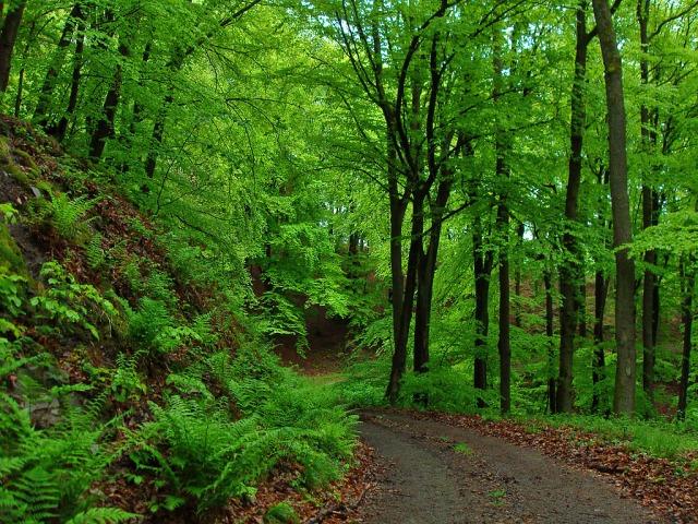 Sattes Grün und viel Farn am Wegesrand