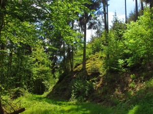 Naturbelassene Waldwege