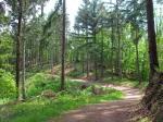 Waldweg am Moselhöhenweg