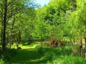 Wiesenwege im Tal