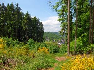 der gelbe Wald