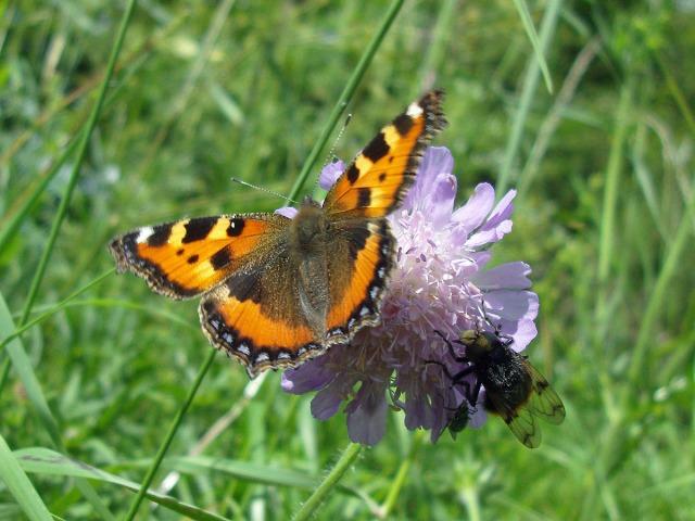 Schmetterling, Fliege und Käfer beim Mittagsmahl