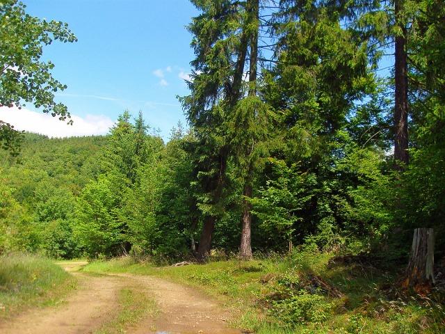 ein wenig Wald