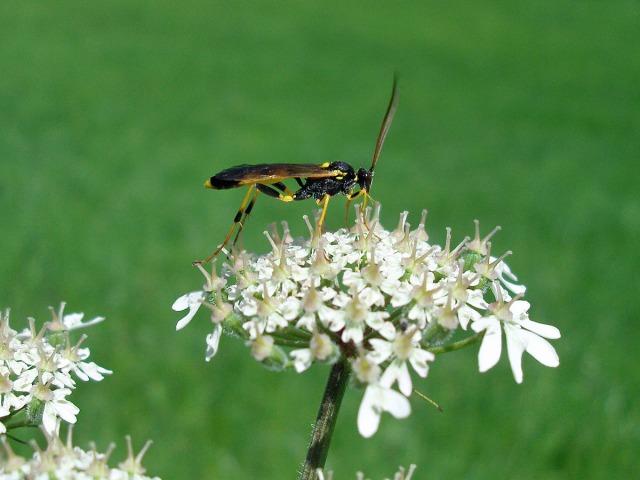 Ein flotter Käfer kurz vor dem Ziel