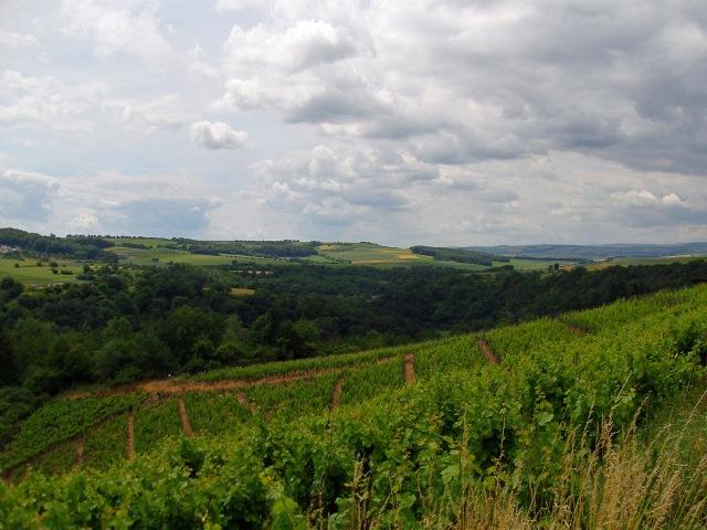 Bunte Fernsicht: Felder, Wiesen, Wald und Wein
