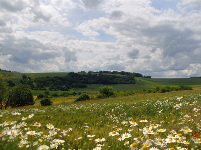 sanfte Hügel und bunte Felder