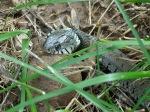 Schlangenmahlzeit