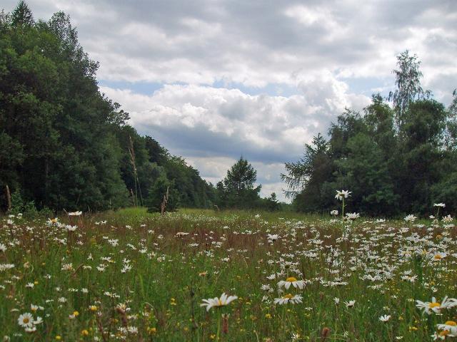 Mitten im Wald sorgt eine romantische Blumenwiese für Abwechslung