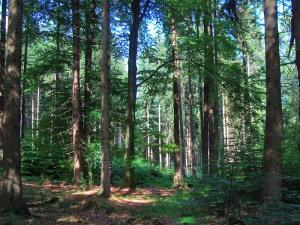 idyllischer Wald an der Kohlstraße