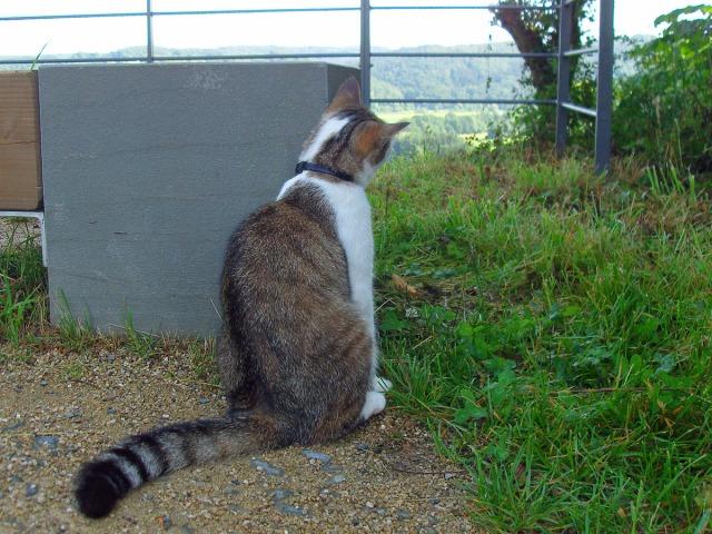 die Katze genießt den Ausblick ebenfalls
