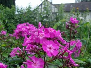 Blumen und Fachwerk in Auel