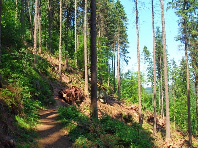 Dann geht es mal durch urige Waldabschnitte