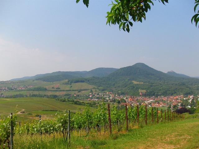 Blick von den Weinlagen in Richtung Süden