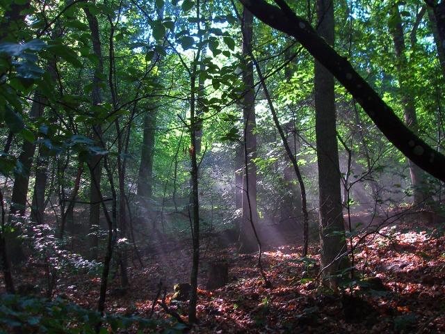 Die Sonnenstrahlen suchen ihren Weg