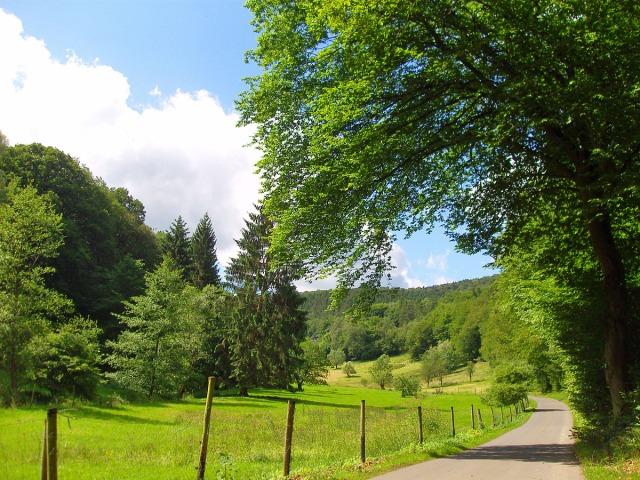 ein kurzes Stück an Wiesen vorbei und dann gehts auch wieder in den Wald
