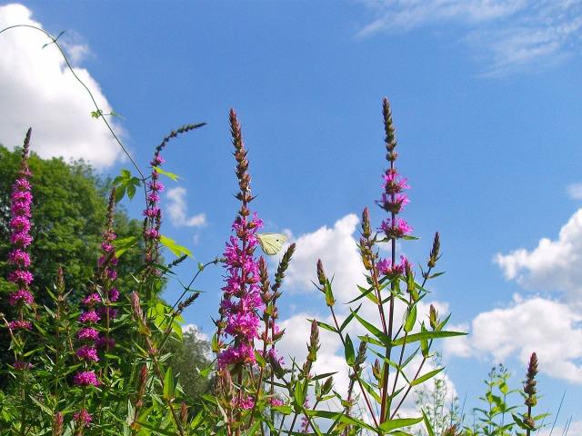 Blüten und Schmetterling