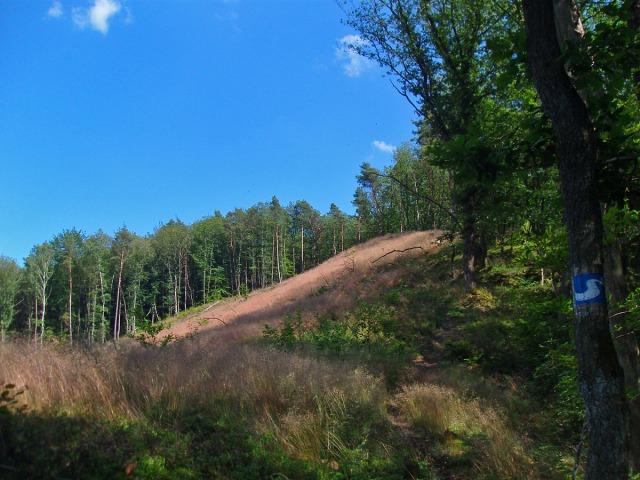 hier führt der Pfad rechts am Wald entlang hinauf