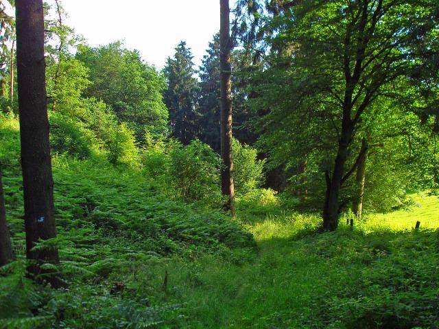 Wiesenwaldpfad