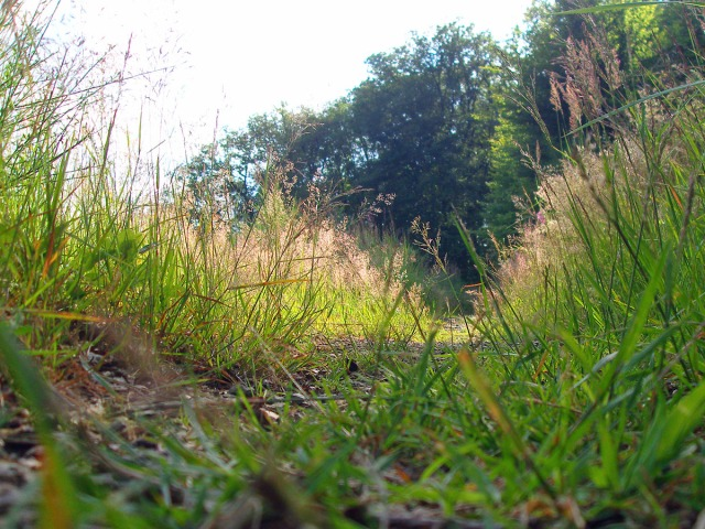 Graspfad