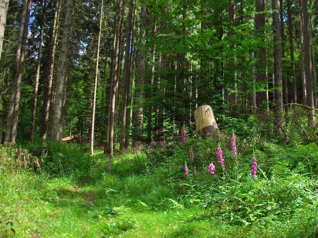 links der Graspfad führt hinauf