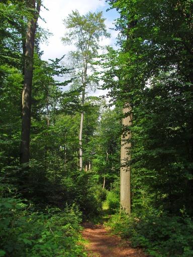 auf dem E4 ein schmaler Waldpfad