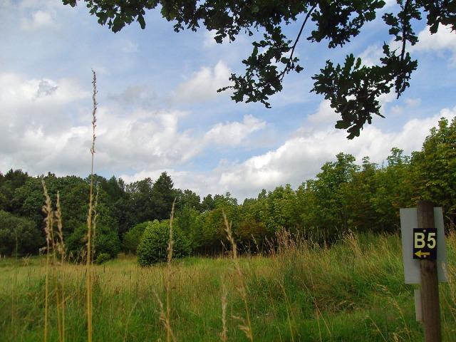 Wiesenpfad vor dem Birkenhof