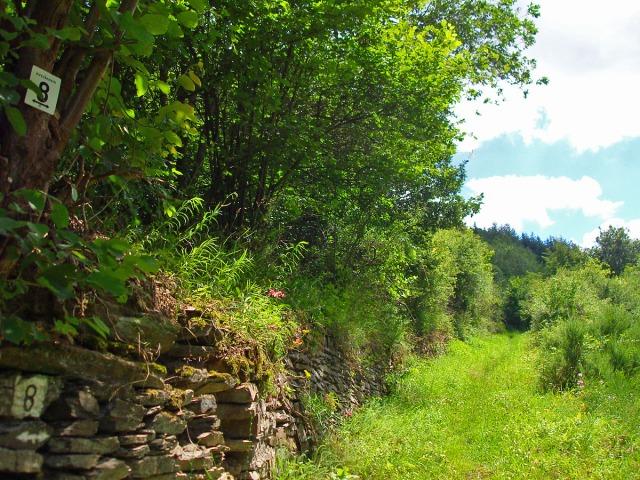 Wiesenpfade entlang alter Mauern